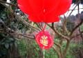 春节随手拍picture